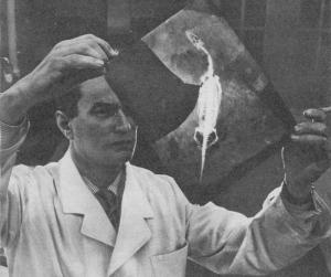Nicht mein Skelett - Foto aus: Kristall (1954)