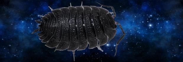 Kellerassel verstößt gegen intergalaktisches Recht